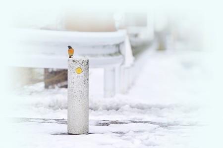 注意雪道 −ジョビ男くんの巻−