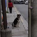 Photos: 野良犬