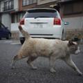 パチリ中に前を横切るネコさん