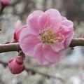 写真: 愛なき信仰は野いばらのとげ ふくよかな花瓣もなく芳き香りもなし