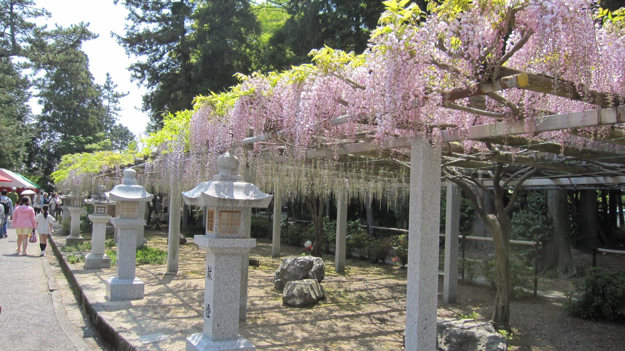 三大神社(志那三郷の藤)