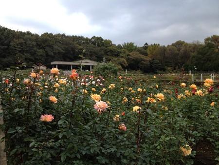 神代植物園バラフェスタ