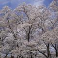 Photos: 野川公園(2)
