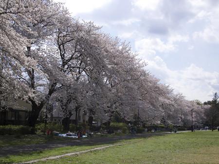 野川公園(5)