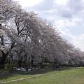 Photos: 野川公園(5)