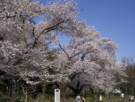 神代植物公園(2)