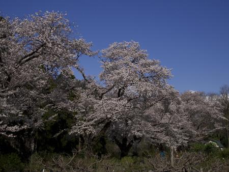神代植物公園(3)