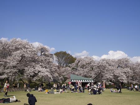 神代植物公園(9)