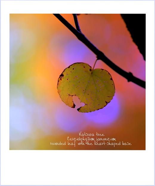 A Heart-Break-Leaf