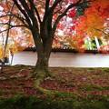 築地塀周辺の紅葉3