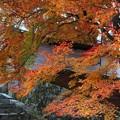 勅使門付近と紅葉