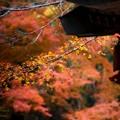 念仏寺の紅葉風景