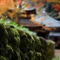 紅葉の念仏寺境内