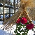 雪のぼたん苑4