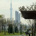 Photos: 春うらら汐入公園