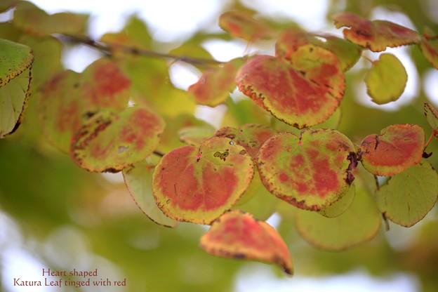 ハート型の紅葉