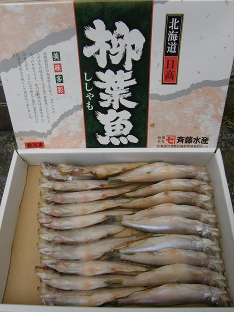 柳葉魚(ししゃも) by 斉藤水産