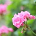 Photos: Pink World ♪