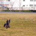 Photos: 飛行犬アルト