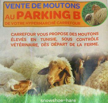 駐車場で羊を売ります