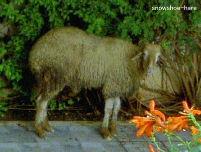 隣の羊・2012年