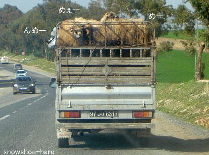 羊のドナドナ車