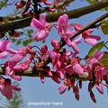 Photos: マメ科っぽい春の花