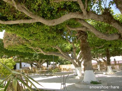 カフェの木々