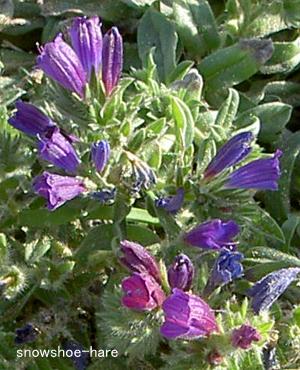 海辺に咲く紫の花