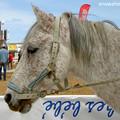Photos: チュニジアで見た馬