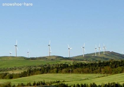 風力発電の風車群