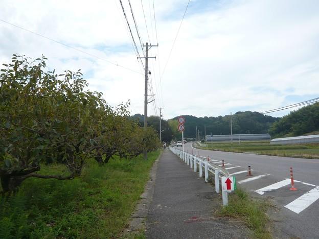 P1310085筆柿の里・幸田