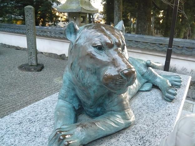 P1320558金剛證寺のトラ