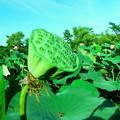 Photos: 20120908_153846