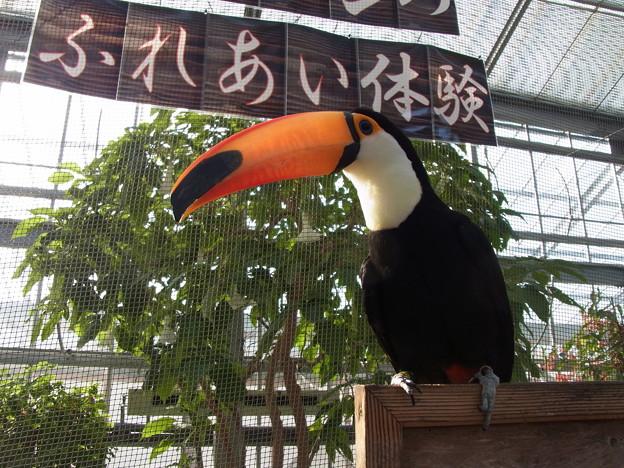 Photos: 20121216_140346