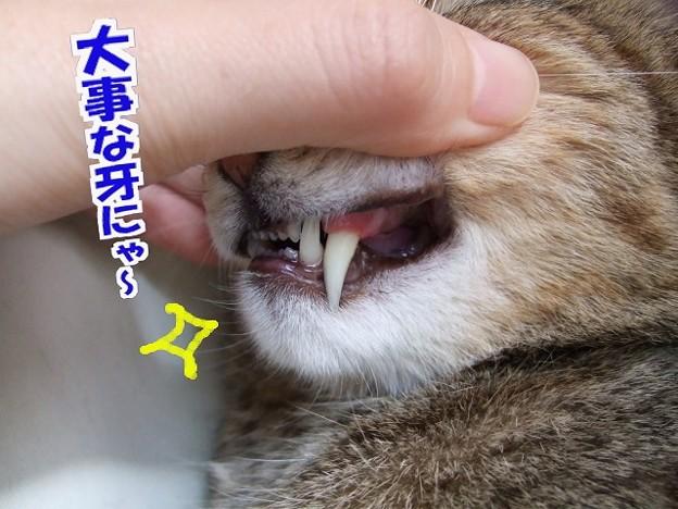 歯石がとれてピッカピカ