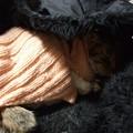 Photos: 猫にセーター着せました