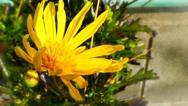 太陽からパワーをもらう花