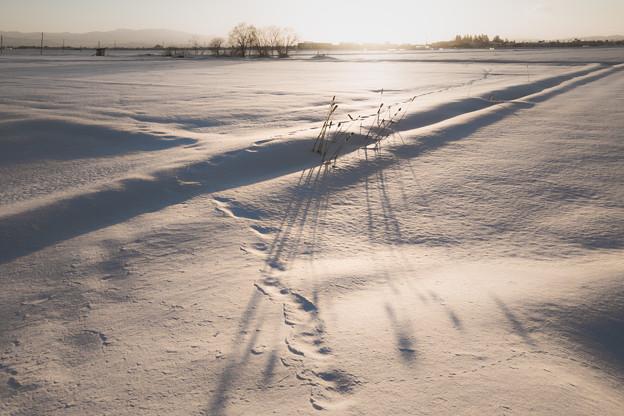 居残りと足影と足跡と