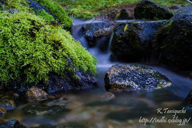 Photos: わき水の流れ DP2x