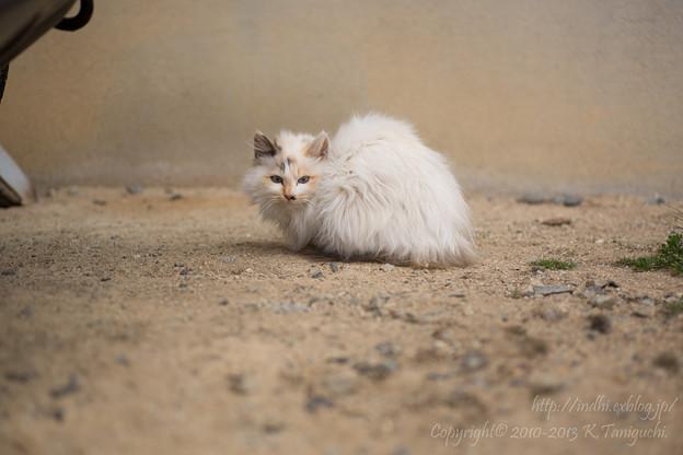 Photos: 子猫