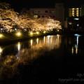 Photos: 堀の桜