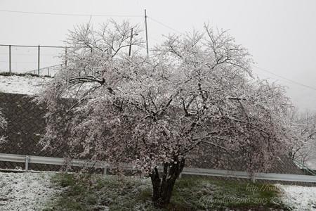 白いのは雪