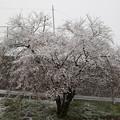 Photos: 白いのは雪