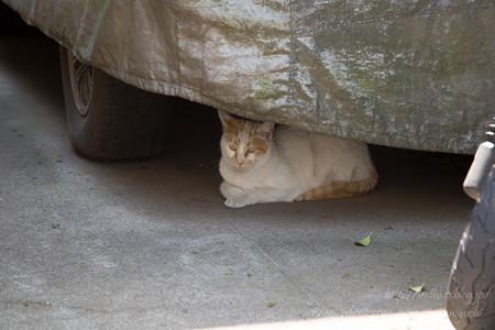 東京でネコ