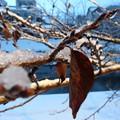 Photos: 春に向けて