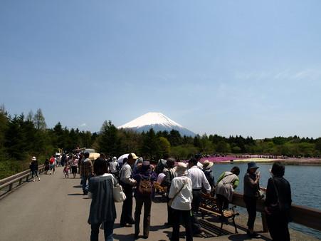 富士芝桜3