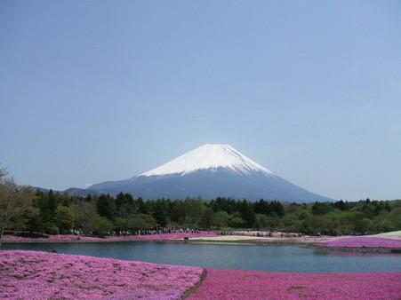 富士芝桜11