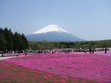 富士芝桜25