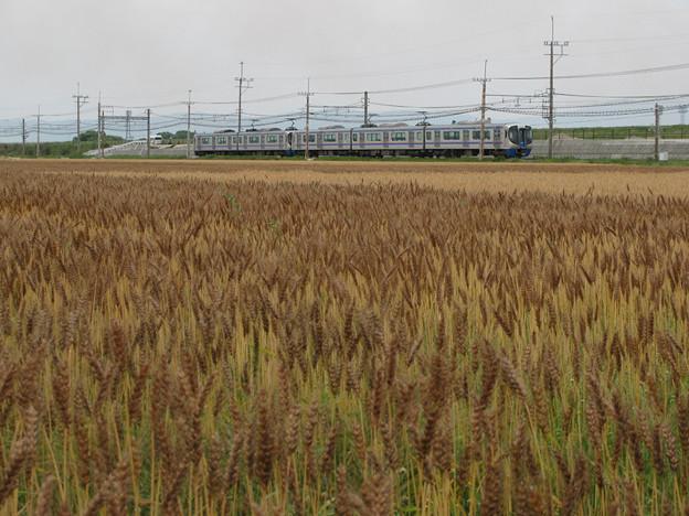 小麦も種類があるようで(1)